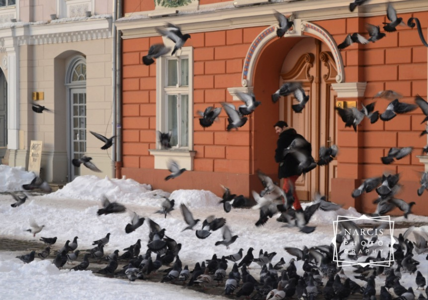 Timisoara_under-Snow-by-Narcis_Lupou-2016-12-26 at 11_Fotor-644