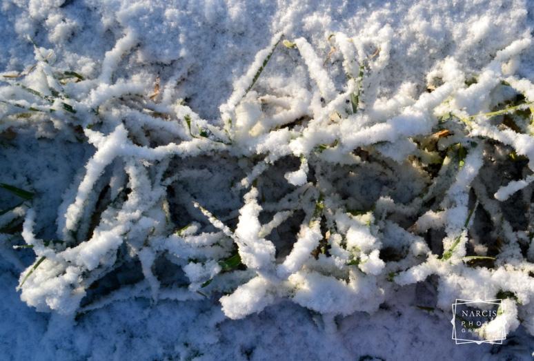 winterolidays-in-transylvania-5